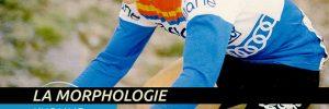 La morphologie